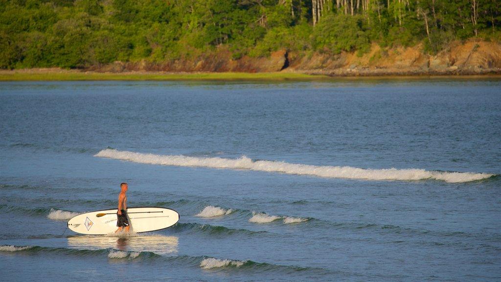 Playa Higgins mostrando surf y vistas generales de la costa y también un hombre