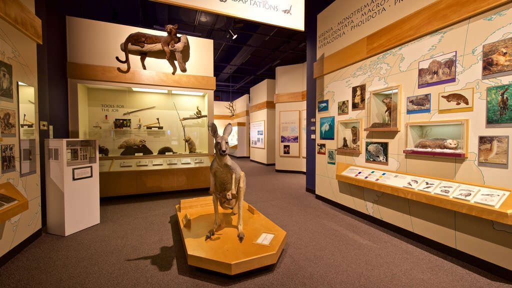 Putnam Museum featuring interior views