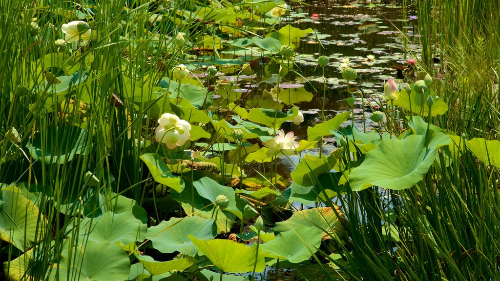 Reiman Gardens which includes wildflowers and a pond