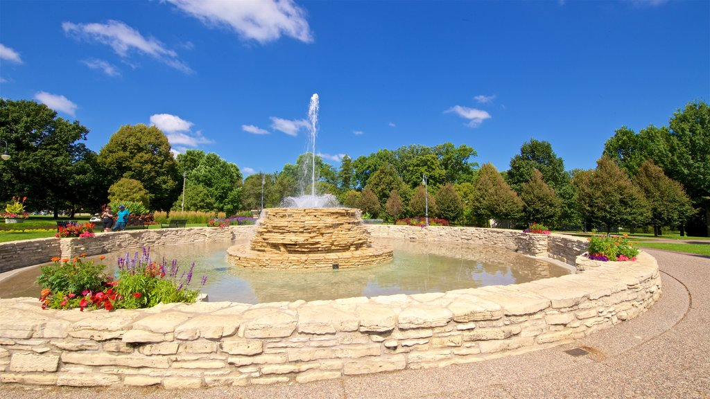 Vander Veer Botanical Park showing a fountain, wildflowers and a park