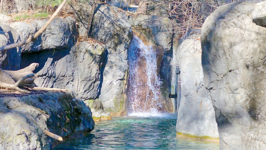 Maryland Zoo featuring landscape views and zoo animals