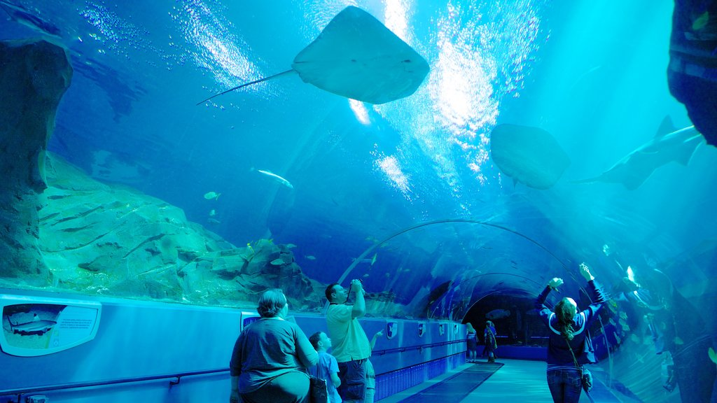 Georgia Aquarium showing marine life and interior views