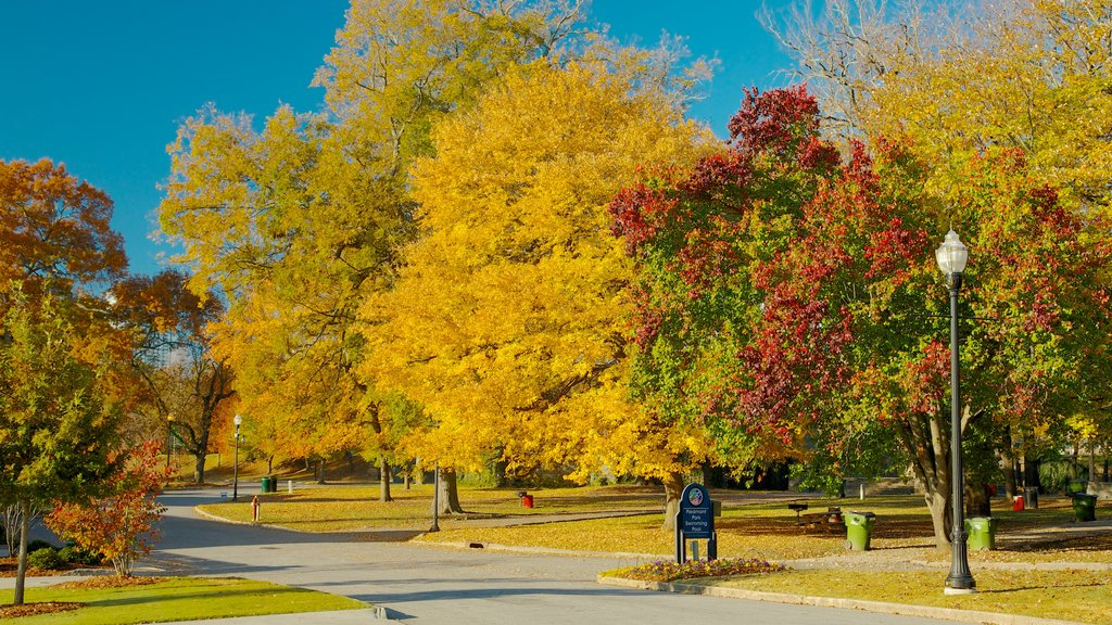Piedmont Park que incluye los colores del otoño, un parque y vistas de paisajes