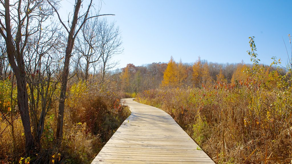 Minnesota Landscape Arboretum featuring fall colors, a park and landscape views