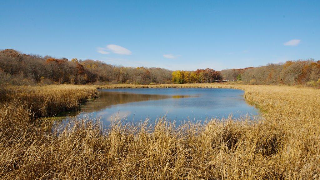 Minnesota Landscape Arboretum which includes landscape views, a pond and tranquil scenes