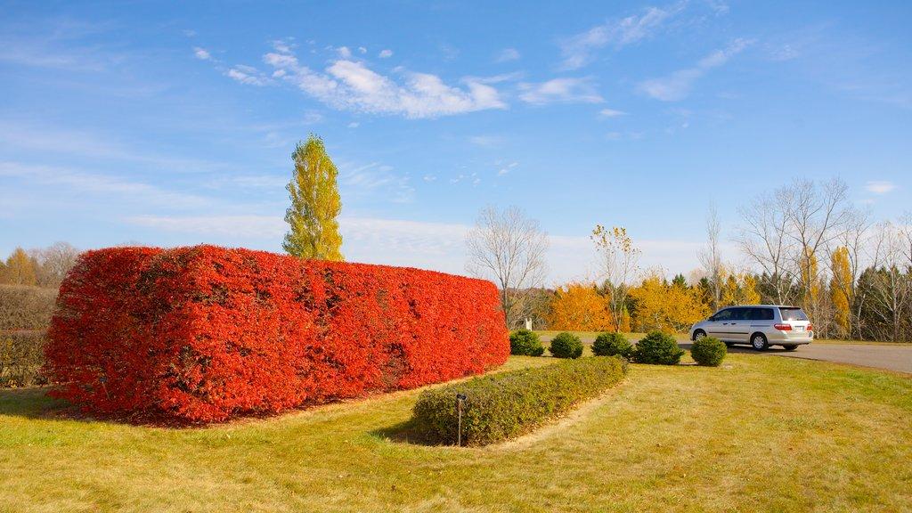 Minnesota Landscape Arboretum que incluye vistas de paisajes y un jardín