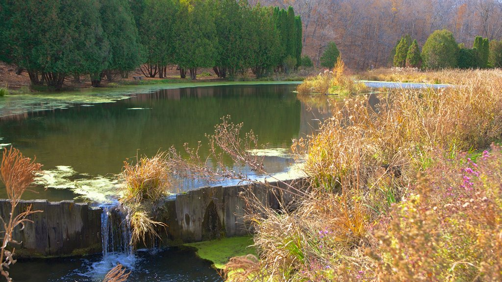 Minnesota Landscape Arboretum which includes a garden, a lake or waterhole and landscape views