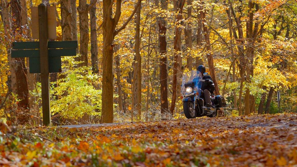 Eagle Creek Park showing a park, landscape views and forest scenes