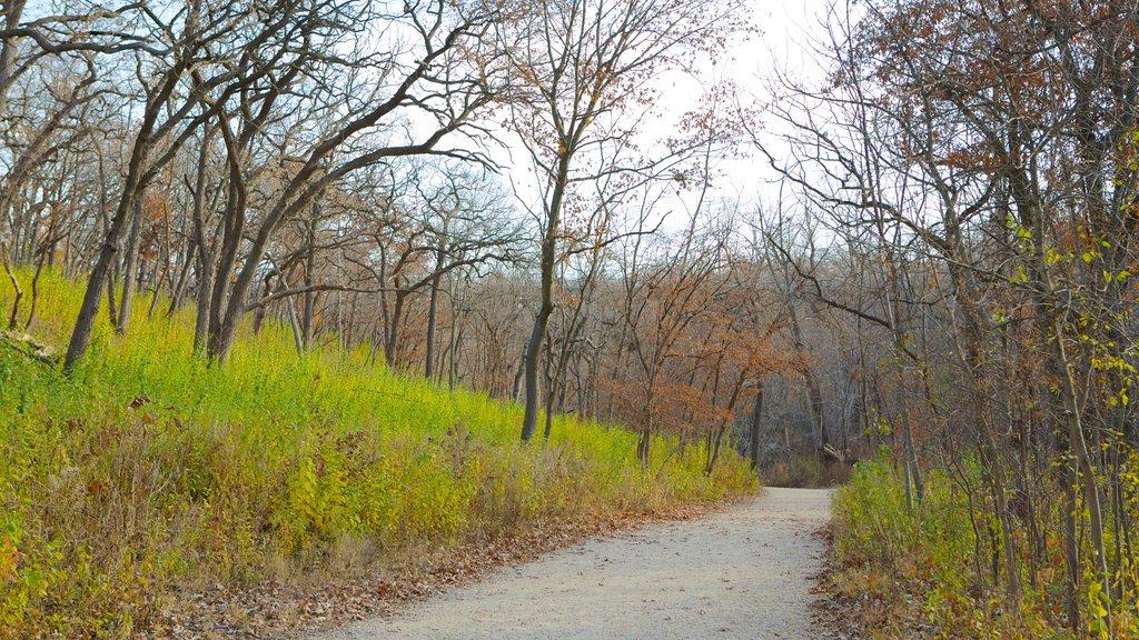 Minnehaha Park ofreciendo un parque, vistas de paisajes y los colores del otoño