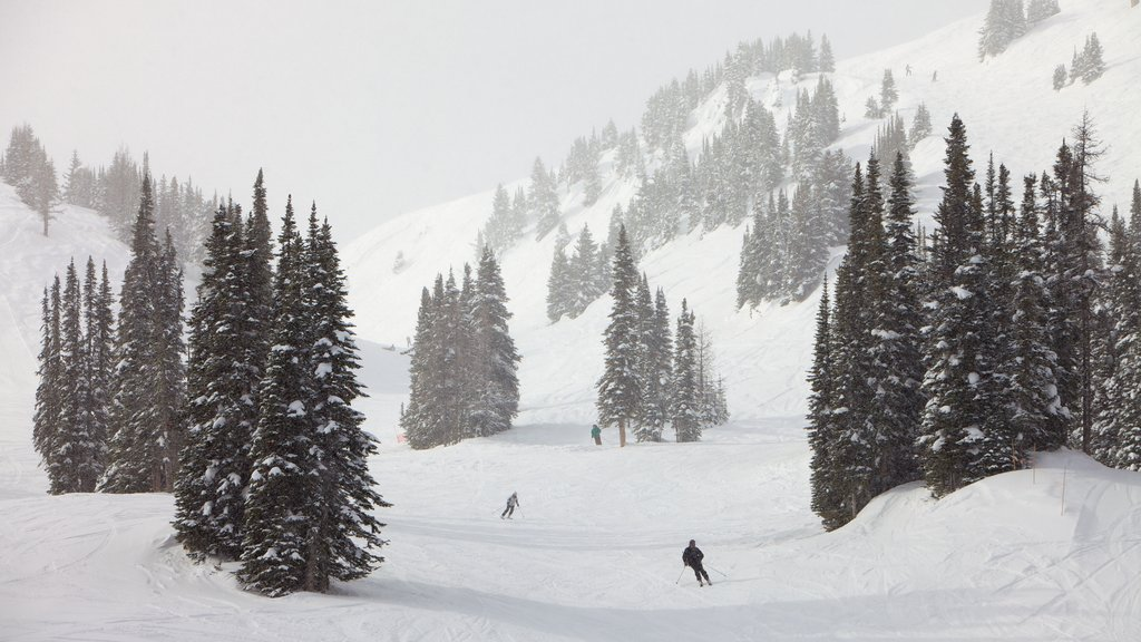 Sunshine Village showing snow, snow skiing and mountains