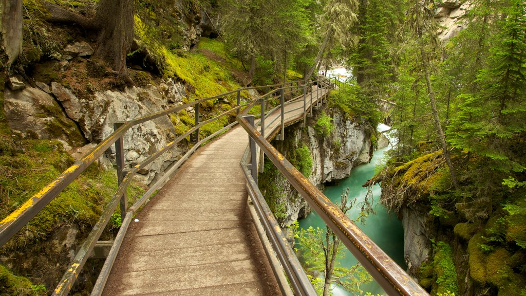 Johnston Canyon showing a river or creek, a park and a gorge or canyon