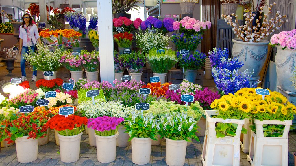 Flower Market which includes wildflowers, markets and flowers