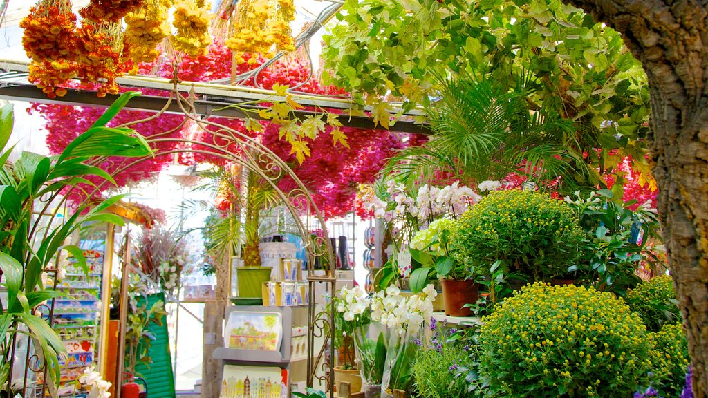 Flower Market which includes flowers and markets