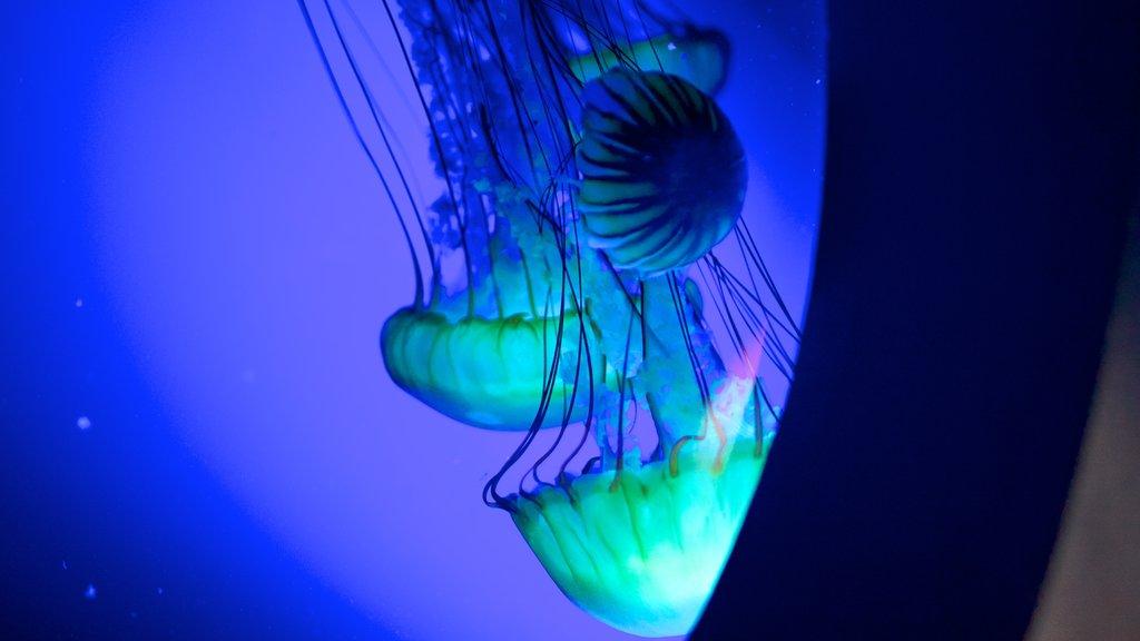 Living Planet Aquarium featuring marine life