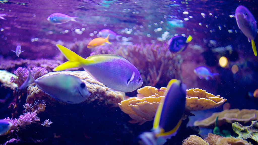 Living Planet Aquarium featuring colorful reefs and marine life