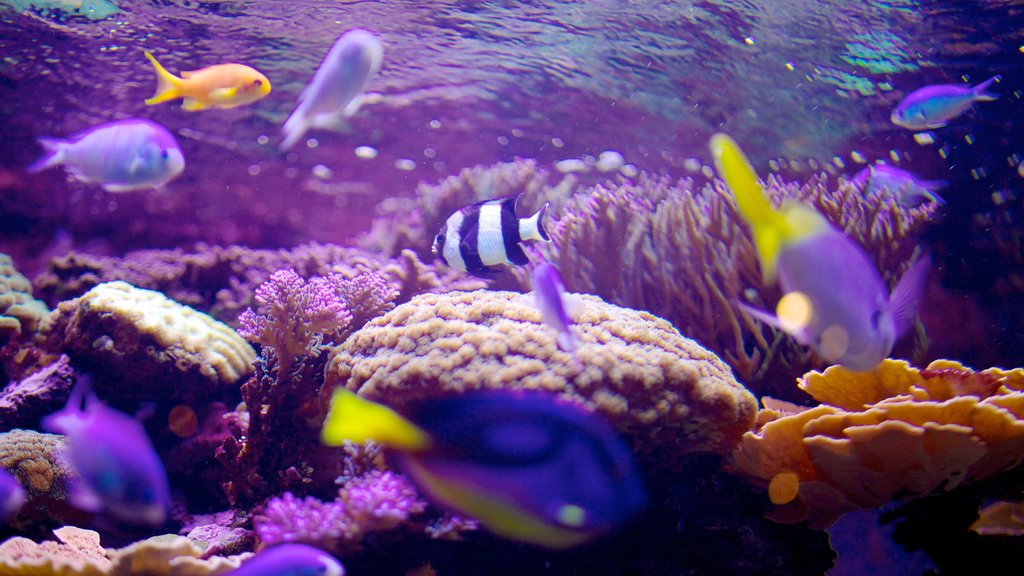 Living Planet Aquarium which includes marine life