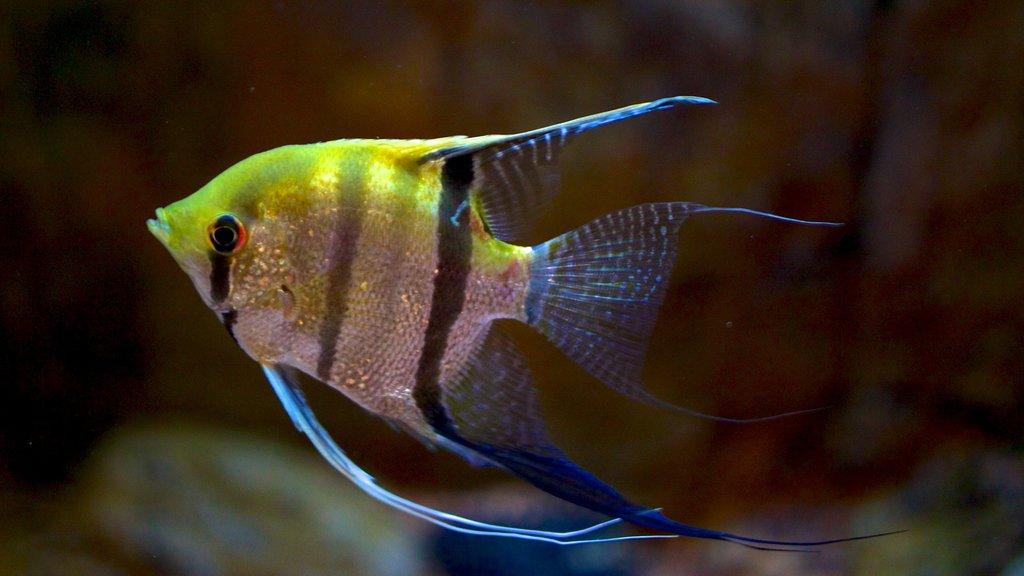 Living Planet Aquarium showing marine life