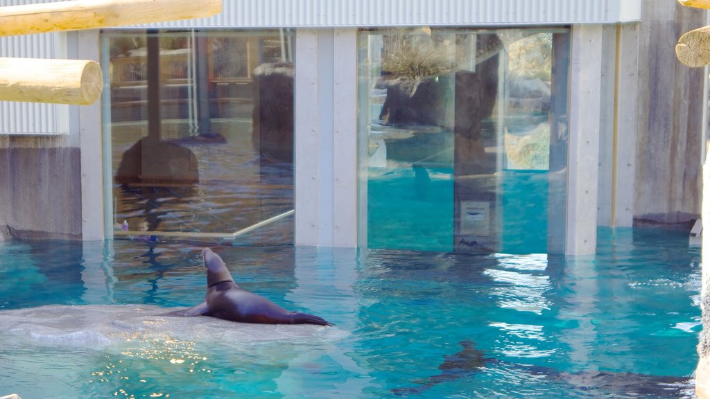 Hogle Zoo showing zoo animals and marine life