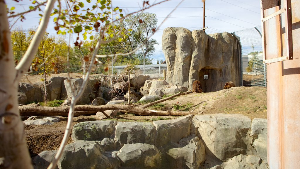 Hogle Zoo showing zoo animals and landscape views