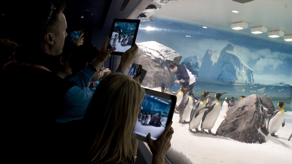 Sea World featuring bird life and interior views