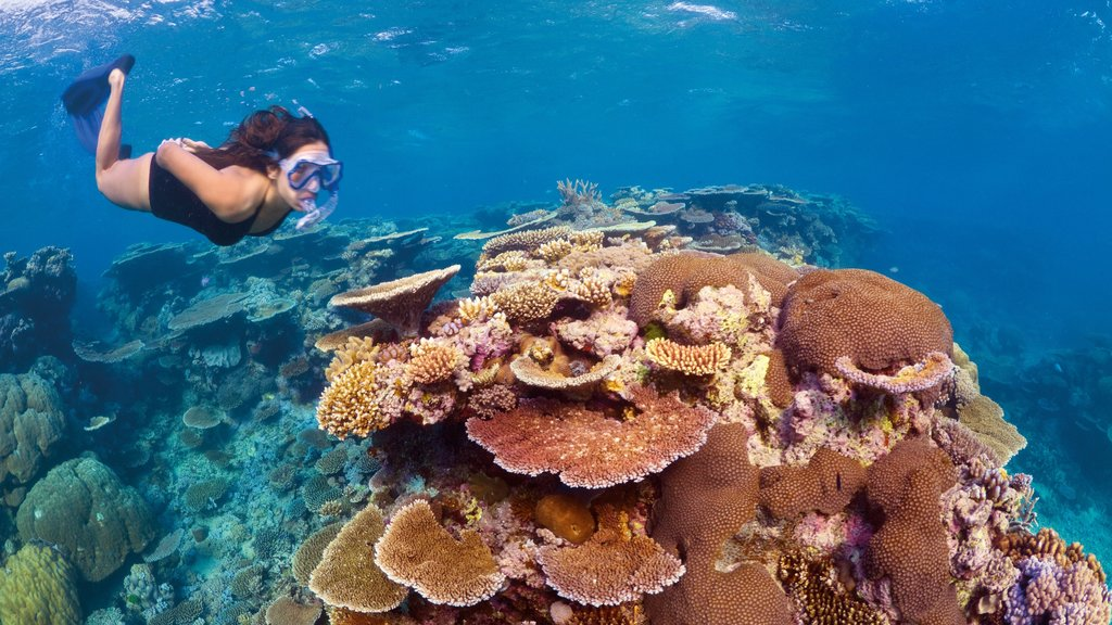 Great Barrier Reef featuring coral as well as an individual femail