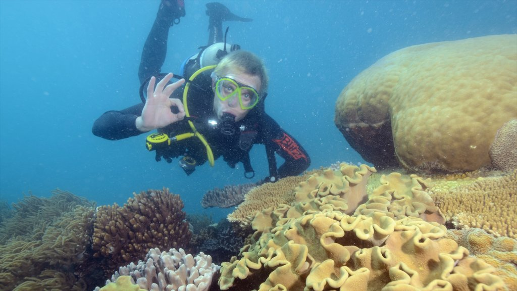 Great Barrier Reef which includes coral and diving as well as an individual male
