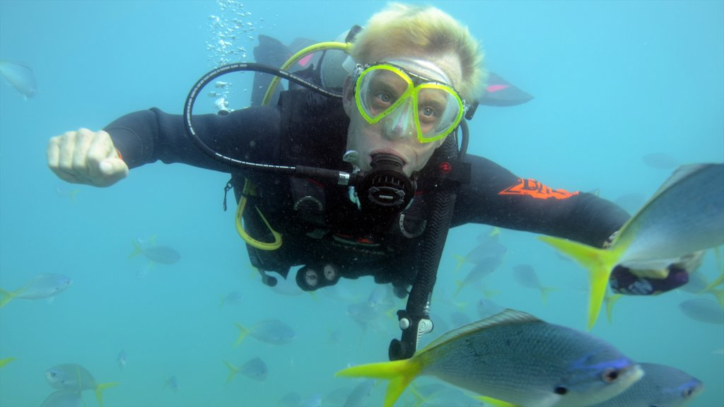 Great Barrier Reef showing diving and marine life as well as an individual male
