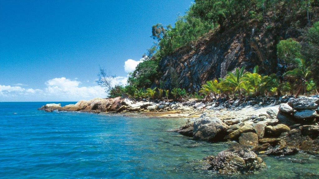 Palm Cove que incluye costa escarpada, vistas de paisajes y escenas tropicales