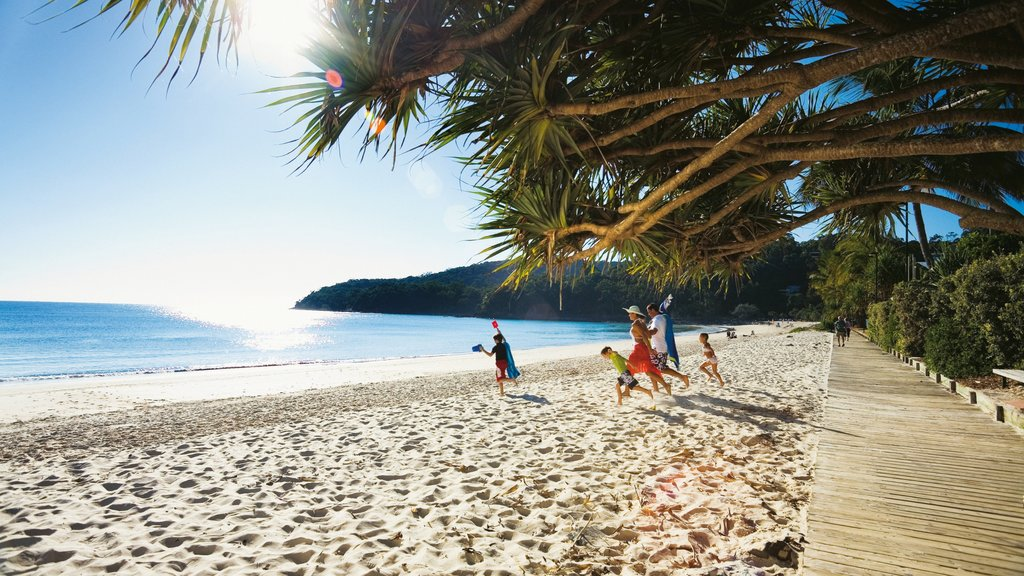 Noosa Heads which includes a sandy beach and tropical scenes as well as a family