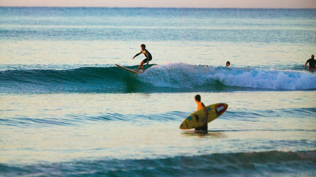 Noosa Heads featuring surfing and surf