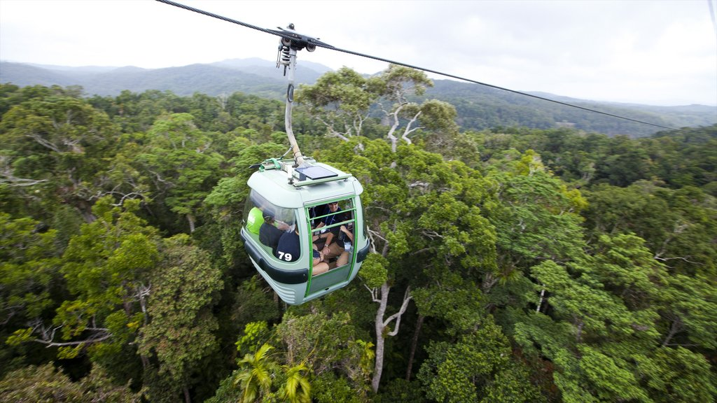 Kuranda featuring a gondola and forests