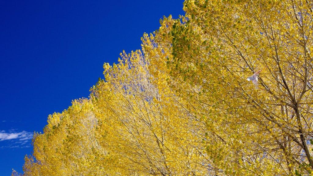 Big Bear Lake featuring autumn leaves