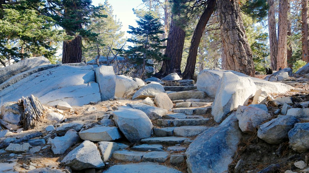 Palm Springs Aerial Tramway which includes forest scenes and landscape views