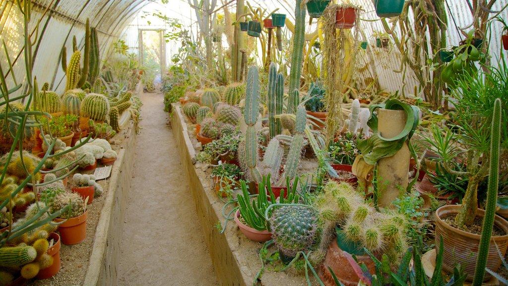 Moorten Botanical Garden and Cactarium showing flowers, interior views and a park