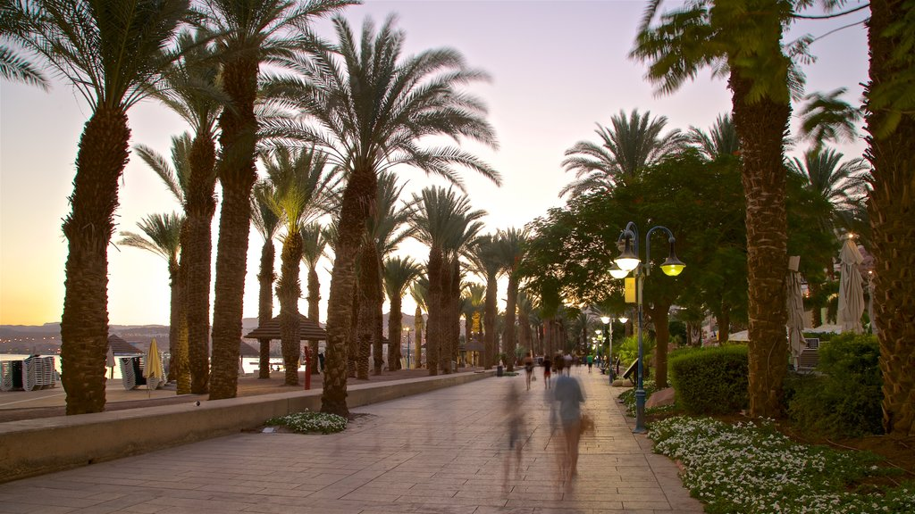 Eilat featuring wildflowers, a garden and a sunset
