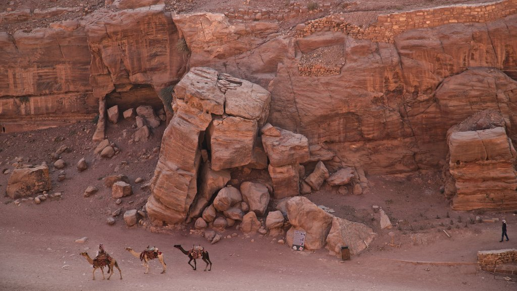 Petra showing a gorge or canyon and land animals