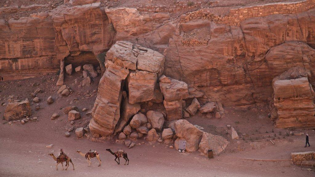 Petra mostrando animales terrestres y un barranco o cañón