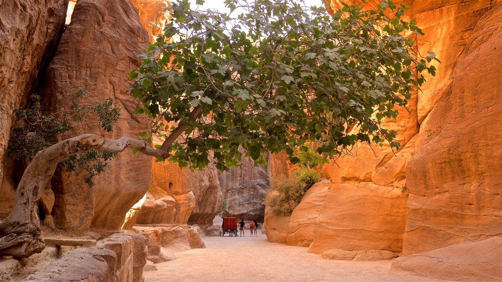Wadi Musa featuring a gorge or canyon as well as a small group of people