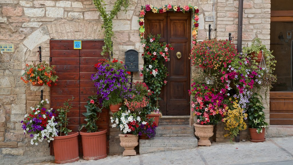 Spello featuring flowers