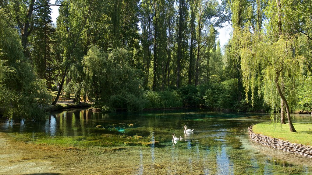 Springs of Clitunno showing bird life and a pond