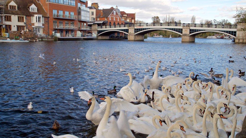 Eton ofreciendo vida de las aves y un río o arroyo