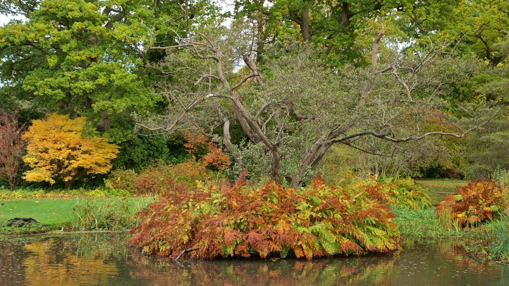 Savill Garden which includes fall colors, a park and a pond