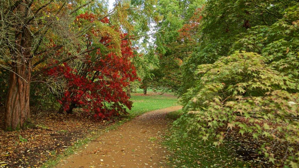 Savill Garden showing a garden and fall colors