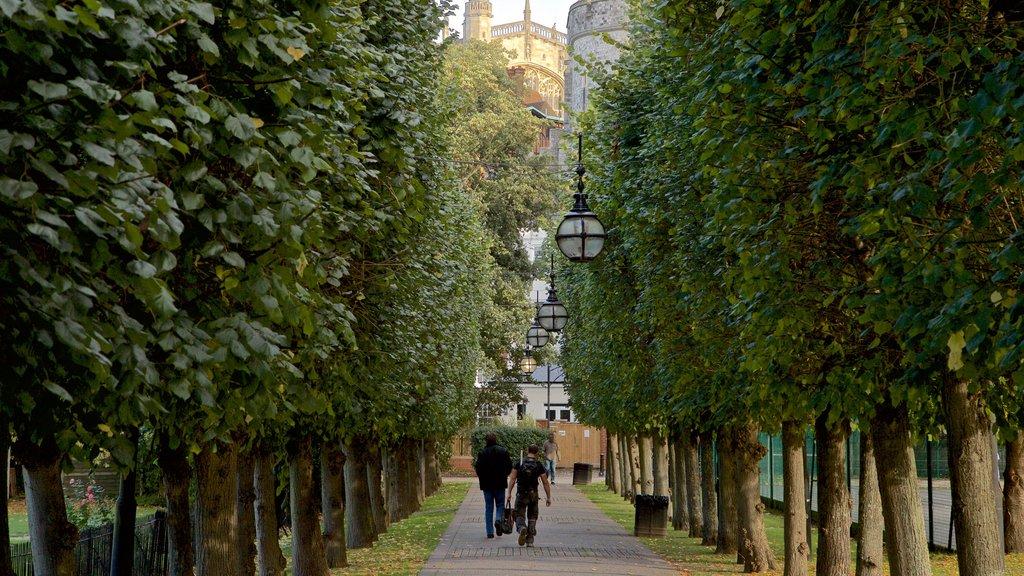 Windsor mostrando un parque