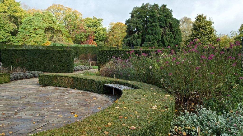 Savill Garden showing a garden and wildflowers