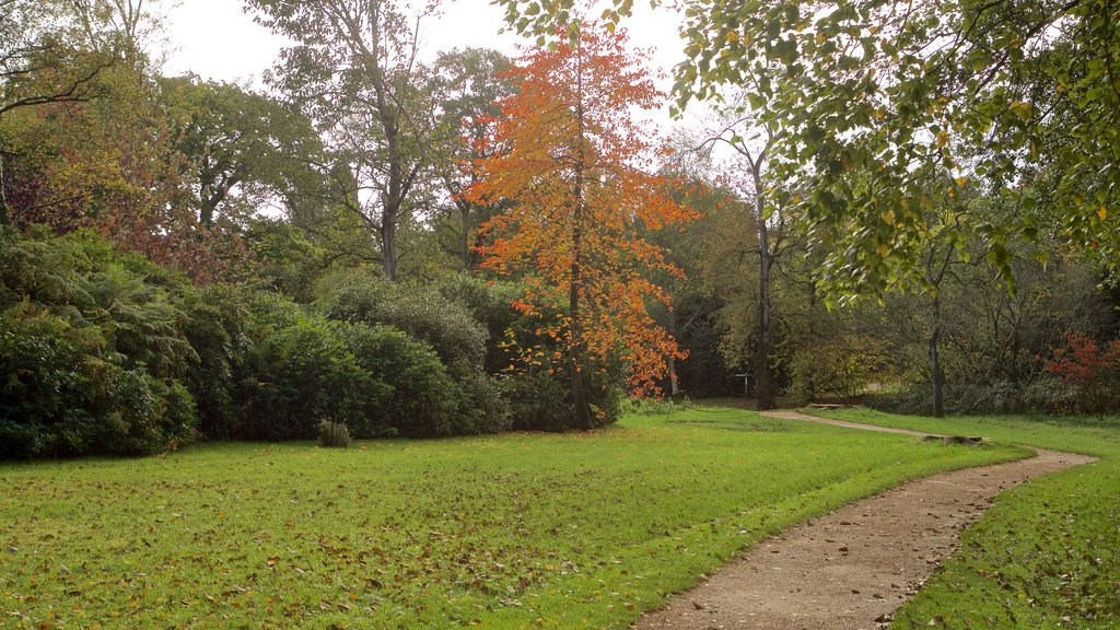 Savill Garden showing fall colors and a park