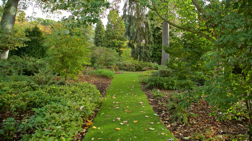 Savill Garden featuring a garden