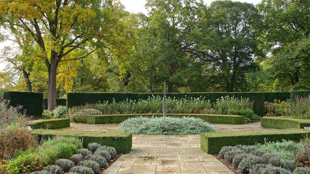 Savill Garden showing a garden