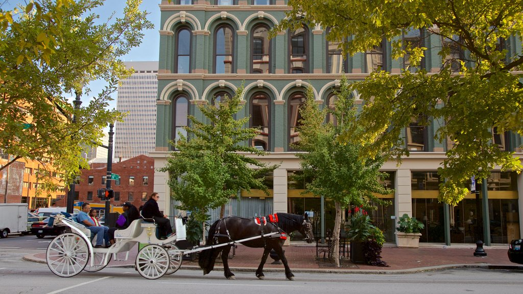 Louisville showing horseriding, land animals and heritage elements