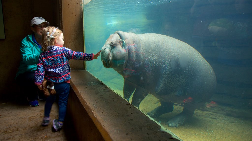 Louisville Zoo which includes marine life as well as a family